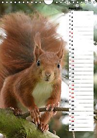 Eichhörnchen - kleine Tiere, große Liebe (Wandkalender 2019 DIN A4 hoch) - Produktdetailbild 4
