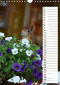 Eichhörnchen - kleine Tiere, große Liebe (Wandkalender 2019 DIN A4 hoch) - Produktdetailbild 7