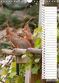 Eichhörnchen - kleine Tiere, große Liebe (Wandkalender 2019 DIN A4 hoch) - Produktdetailbild 6