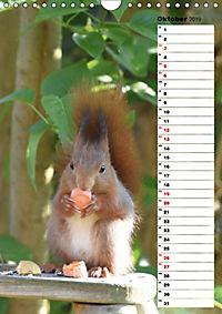 Eichhörnchen - kleine Tiere, große Liebe (Wandkalender 2019 DIN A4 hoch) - Produktdetailbild 10