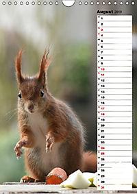 Eichhörnchen - kleine Tiere, große Liebe (Wandkalender 2019 DIN A4 hoch) - Produktdetailbild 8