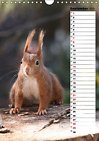 Eichhörnchen - kleine Tiere, große Liebe (Wandkalender 2019 DIN A4 hoch) - Produktdetailbild 9