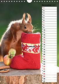 Eichhörnchen - kleine Tiere, große Liebe (Wandkalender 2019 DIN A4 hoch) - Produktdetailbild 12