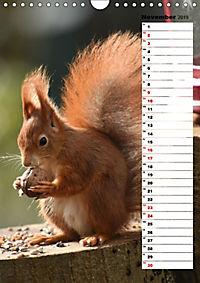 Eichhörnchen - kleine Tiere, große Liebe (Wandkalender 2019 DIN A4 hoch) - Produktdetailbild 11