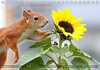 Eichhörnchen Luna und ihre Kinder (Tischkalender 2019 DIN A5 quer) - Produktdetailbild 8