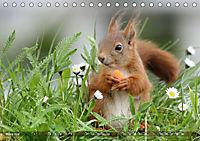Eichhörnchen Luna und ihre Kinder (Tischkalender 2019 DIN A5 quer) - Produktdetailbild 3