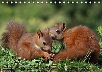 Eichhörnchen Luna und ihre Kinder (Tischkalender 2019 DIN A5 quer) - Produktdetailbild 9