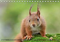 Eichhörnchen Luna und ihre Kinder (Tischkalender 2019 DIN A5 quer) - Produktdetailbild 4