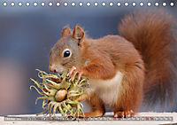 Eichhörnchen Luna und ihre Kinder (Tischkalender 2019 DIN A5 quer) - Produktdetailbild 10