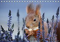 Eichhörnchen Luna und ihre Kinder (Tischkalender 2019 DIN A5 quer) - Produktdetailbild 11