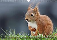 Eichhörnchen Luna und ihre Kinder (Wandkalender 2019 DIN A4 quer) - Produktdetailbild 4