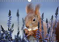 Eichhörnchen Luna und ihre Kinder (Wandkalender 2019 DIN A4 quer) - Produktdetailbild 6