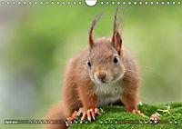 Eichhörnchen Luna und ihre Kinder (Wandkalender 2019 DIN A4 quer) - Produktdetailbild 10