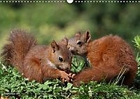 Eichhörnchen Luna und ihre Kinder (Wandkalender 2019 DIN A3 quer) - Produktdetailbild 9