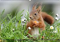 Eichhörnchen Luna und ihre Kinder (Wandkalender 2019 DIN A2 quer) - Produktdetailbild 3