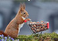 Eichhörnchen Luna und ihre Kinder (Wandkalender 2019 DIN A2 quer) - Produktdetailbild 2