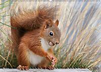Eichhörnchen Luna und ihre Kinder (Wandkalender 2019 DIN A2 quer) - Produktdetailbild 5