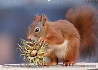 Eichhörnchen Luna und ihre Kinder (Wandkalender 2019 DIN A2 quer) - Produktdetailbild 10