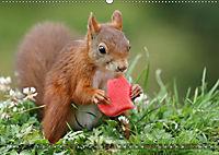 Eichhörnchen Luna und ihre Kinder (Wandkalender 2019 DIN A2 quer) - Produktdetailbild 7