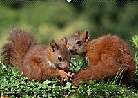 Eichhörnchen Luna und ihre Kinder (Wandkalender 2019 DIN A2 quer) - Produktdetailbild 9
