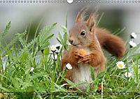 Eichhörnchen Luna und ihre Kinder (Wandkalender 2019 DIN A3 quer) - Produktdetailbild 3