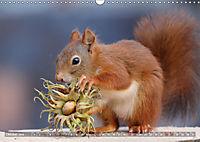 Eichhörnchen Luna und ihre Kinder (Wandkalender 2019 DIN A3 quer) - Produktdetailbild 10