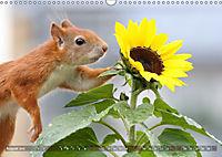 Eichhörnchen Luna und ihre Kinder (Wandkalender 2019 DIN A3 quer) - Produktdetailbild 8