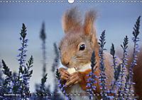 Eichhörnchen Luna und ihre Kinder (Wandkalender 2019 DIN A3 quer) - Produktdetailbild 11