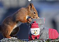 Eichhörnchen Luna und ihre Kinder (Wandkalender 2019 DIN A3 quer) - Produktdetailbild 12