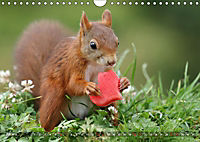 Eichhörnchen Luna und ihre Kinder (Wandkalender 2019 DIN A4 quer) - Produktdetailbild 7