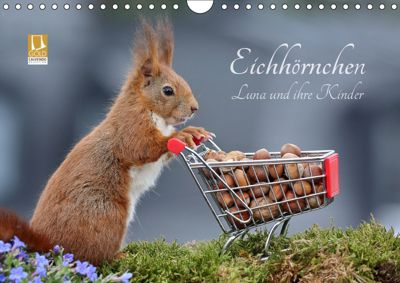 Eichhörnchen Luna und ihre Kinder (Wandkalender 2019 DIN A4 quer), Tine Meier