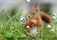 Eichhörnchen Luna und ihre Kinder (Wandkalender 2019 DIN A4 quer) - Produktdetailbild 3