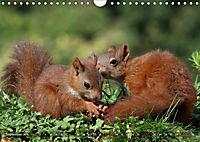 Eichhörnchen Luna und ihre Kinder (Wandkalender 2019 DIN A4 quer) - Produktdetailbild 9
