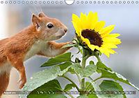 Eichhörnchen Luna und ihre Kinder (Wandkalender 2019 DIN A4 quer) - Produktdetailbild 8