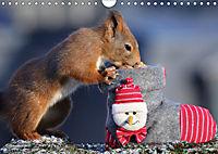 Eichhörnchen Luna und ihre Kinder (Wandkalender 2019 DIN A4 quer) - Produktdetailbild 12