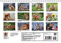 Eichhörnchen Luna und ihre Kinder (Wandkalender 2019 DIN A4 quer) - Produktdetailbild 13