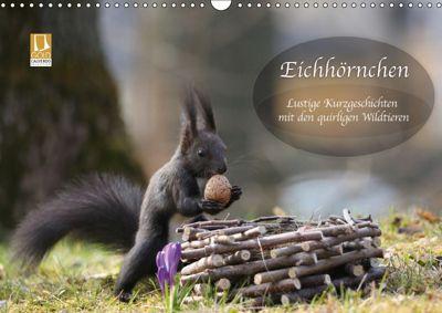 Eichhörnchen - Lustige Kurzgeschichten mit den quirligen Wildtieren (Wandkalender 2019 DIN A3 quer), Birgit Cerny