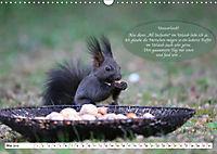 Eichhörnchen - Lustige Kurzgeschichten mit den quirligen Wildtieren (Wandkalender 2019 DIN A3 quer) - Produktdetailbild 5