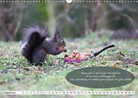 Eichhörnchen - Lustige Kurzgeschichten mit den quirligen Wildtieren (Wandkalender 2019 DIN A3 quer) - Produktdetailbild 8