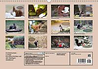 Eichhörnchen - Lustige Kurzgeschichten mit den quirligen Wildtieren (Wandkalender 2019 DIN A3 quer) - Produktdetailbild 13