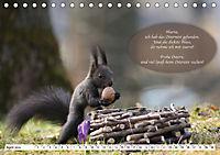 Eichhörnchen - Lustige Kurzgeschichten mit den quirligen Wildtieren (Tischkalender 2019 DIN A5 quer) - Produktdetailbild 4