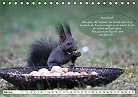 Eichhörnchen - Lustige Kurzgeschichten mit den quirligen Wildtieren (Tischkalender 2019 DIN A5 quer) - Produktdetailbild 5