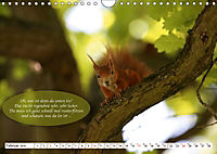 Eichhörnchen - Lustige Kurzgeschichten mit den quirligen Wildtieren (Wandkalender 2019 DIN A4 quer) - Produktdetailbild 2