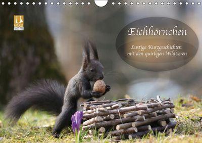 Eichhörnchen - Lustige Kurzgeschichten mit den quirligen Wildtieren (Wandkalender 2019 DIN A4 quer), Birgit Cerny