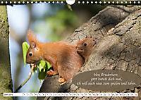 Eichhörnchen - Lustige Kurzgeschichten mit den quirligen Wildtieren (Wandkalender 2019 DIN A4 quer) - Produktdetailbild 6