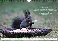 Eichhörnchen - Lustige Kurzgeschichten mit den quirligen Wildtieren (Wandkalender 2019 DIN A4 quer) - Produktdetailbild 5