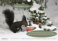 Eichhörnchen - Lustige Kurzgeschichten mit den quirligen Wildtieren (Wandkalender 2019 DIN A4 quer) - Produktdetailbild 12