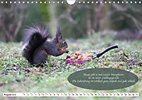 Eichhörnchen - Lustige Kurzgeschichten mit den quirligen Wildtieren (Wandkalender 2019 DIN A4 quer) - Produktdetailbild 8