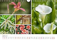 Ein Garten, der zum Verweilen einlädt (Wandkalender 2019 DIN A4 quer) - Produktdetailbild 6