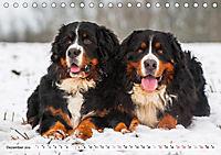 Ein Herz auf 4 Pfoten - Berner Sennenhund (Tischkalender 2019 DIN A5 quer) - Produktdetailbild 12